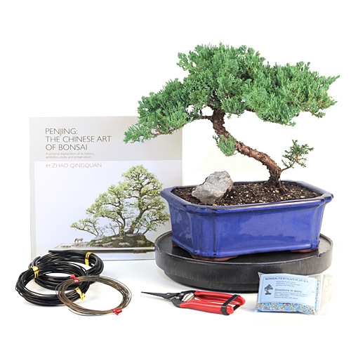 Master Juniper Bonsai Kit Gift Set From Easternleaf Com