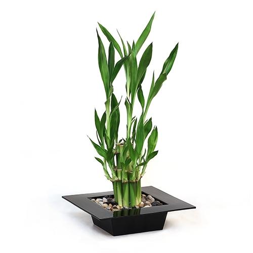 Modern Mini Tiered Bamboo