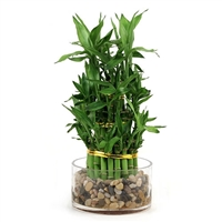 Lucky Bamboo Arrangement - Modern Tiered Bamboo <!-- Lucky Bamboo -->