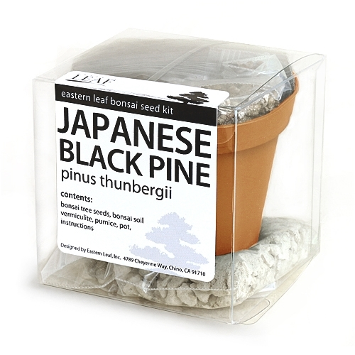 Japanese Black Pine Bonsai Seed Kit