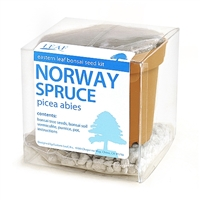 Norway Spruce Bonsai Seed Kit