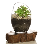 Glass Bowl Terrarium