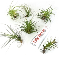 Hanging Air Plant Kit Terrarium