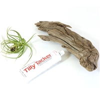 DIY Driftwood Air Plant Kit