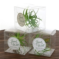 Air Plant Clear Gift Box Favor