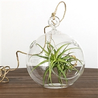 Simple Air Plant Kit Terrarium