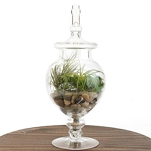 Apothecary Jar Air Plant Terrarium Kit