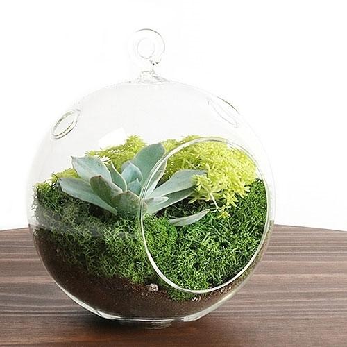 Hanging Succulent Terrarium Kit - Succulent Terrarium Kit