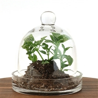 Small Cloche Terrarium Kit