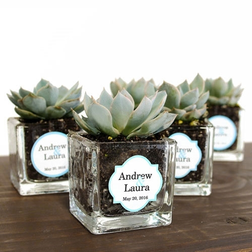 Mini Square Glass Succulent Favor