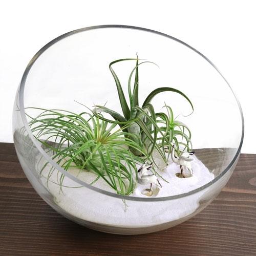 Zen Garden Terrarium Bowl Kit   Large