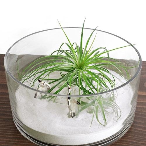 Zen Garden Terrarium Dish Large