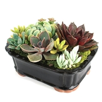 Medium Black Rectangular Succulent Arrangement