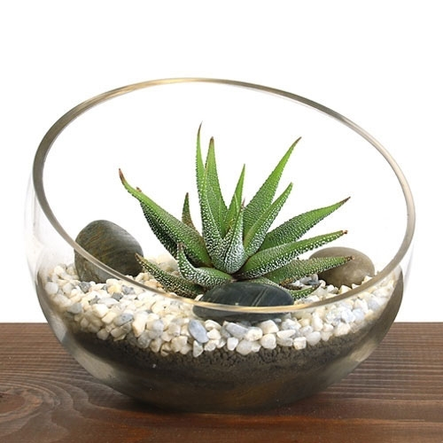 Small Bowl Zen Aloe Terrarium Kit - Bowl Zen Aloe Terrarium Kit