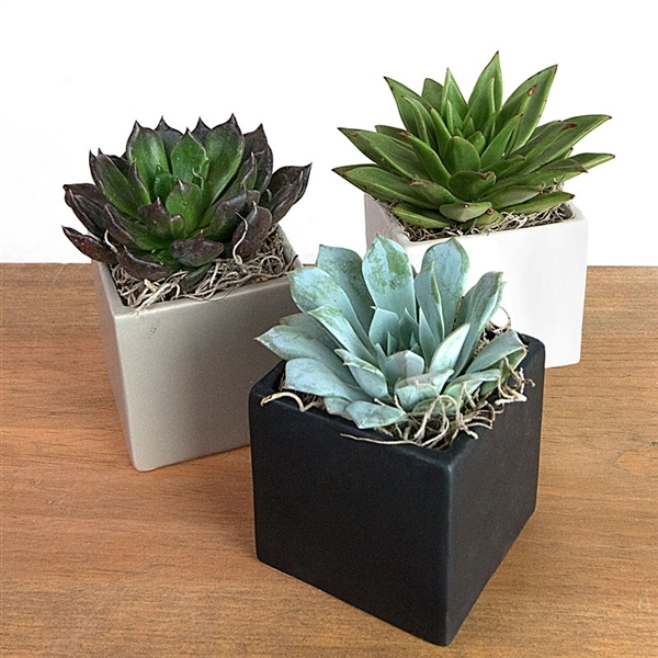 Medium Succulent Cube Arrangement