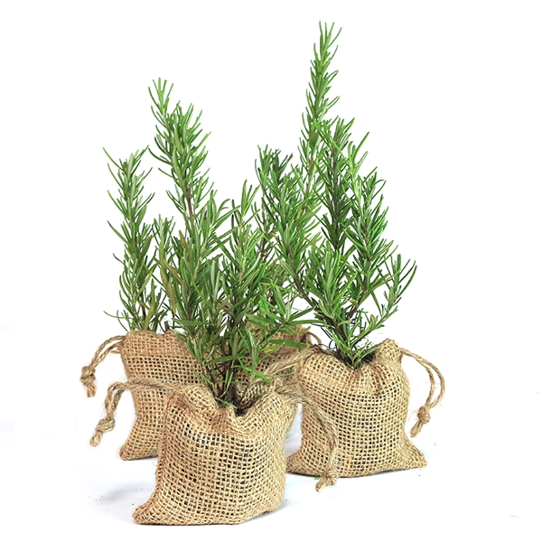 Rosemary Tree Plant Favor - Burlap Pouch