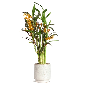 Lucky Bamboo Arrangement - Yellow Floral Lucky Bamboo
