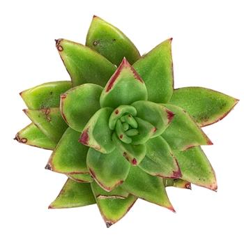 Buy Succulents & Supplies Online | Succulent Terrariums