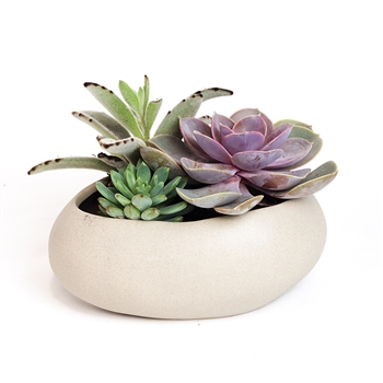 Pebble Bowl Succulent Arrangement