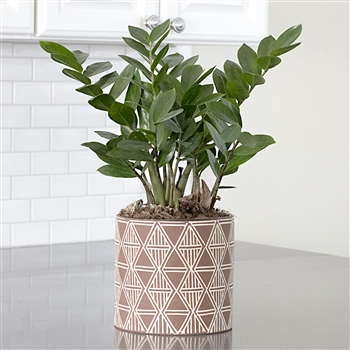 ZZ Plant in Mosaic Planter