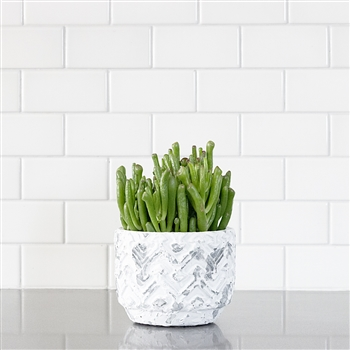 Succulent in Chevron Planter