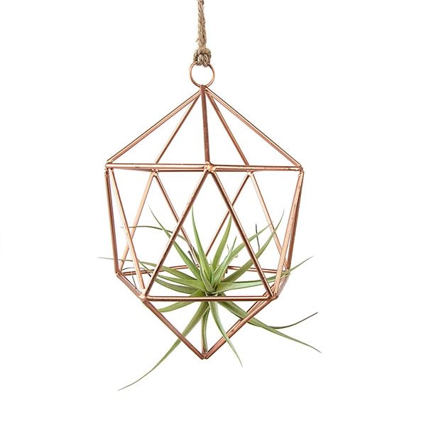 Hanging Geometric Air Plant Ornament Kit