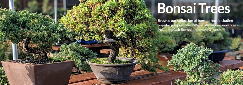 Zen Lifestyle Products Gifts Houseplant Bonsai Tree Supplies