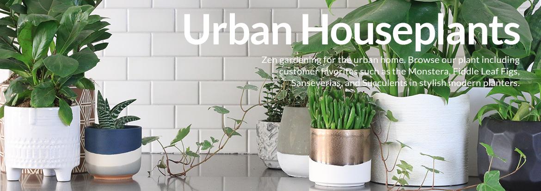 Zen Lifestyle Products & Gifts | Houseplant & Bonsai Tree